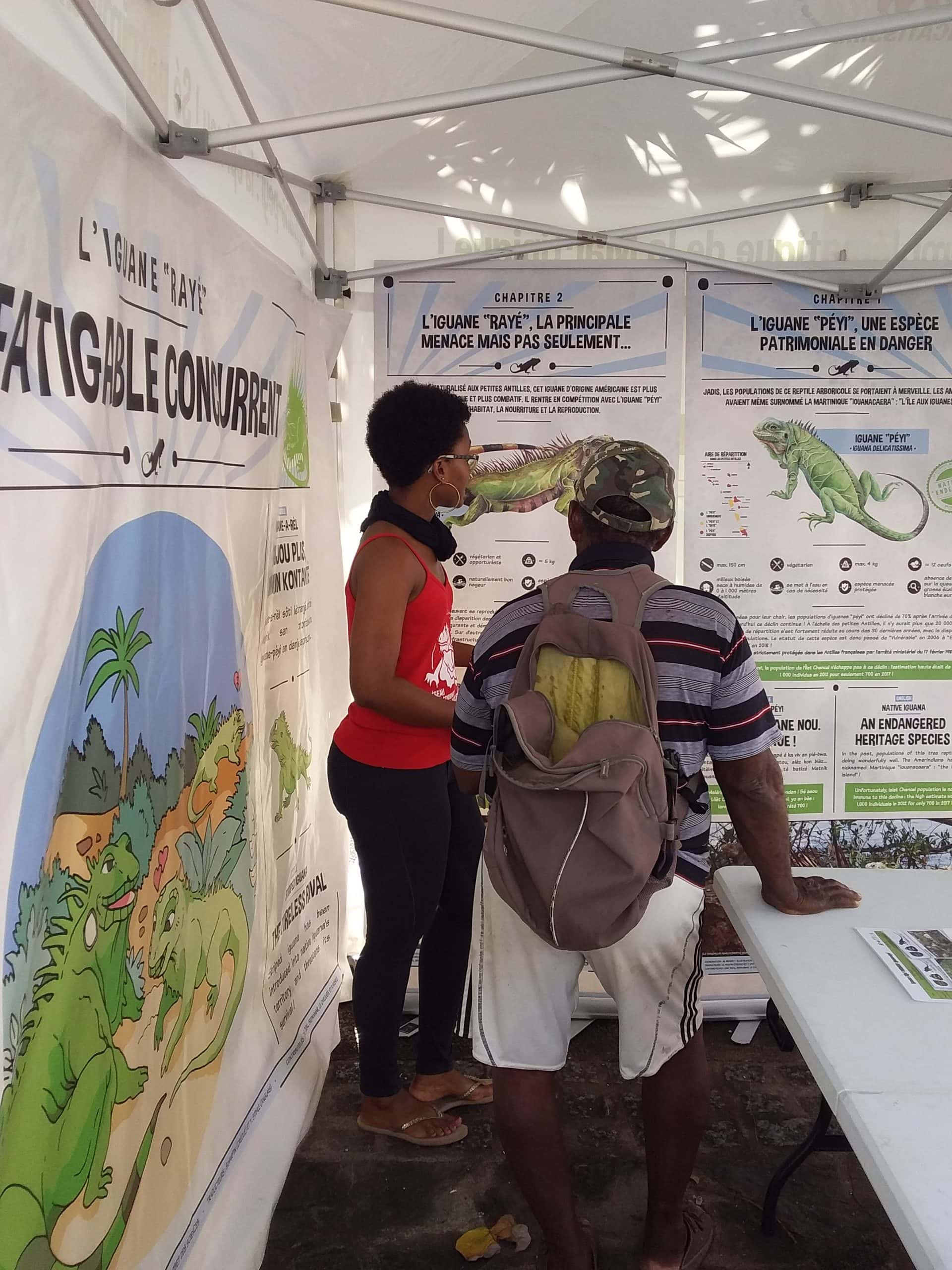 iguanes petites Antilles scaled